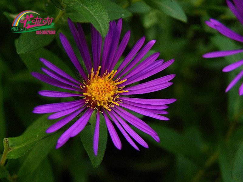 千紫苑欧式风格沙发垫