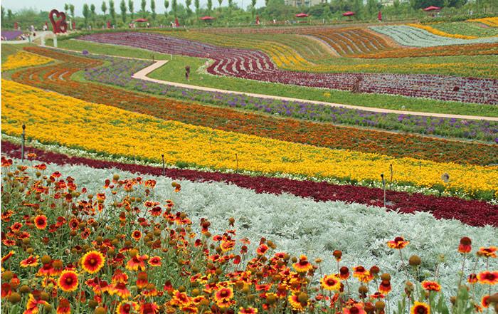 花卉育种基地