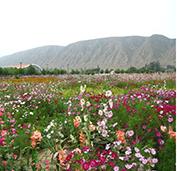 田野风花卉品种质量过关,价格实惠