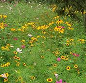 田野风花卉品种造型美观,发芽率特别好