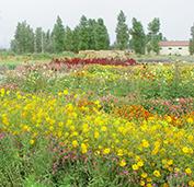 田野风花卉种子发芽率特别高