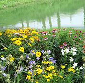 田野风花卉盆景让我的房间很温馨
