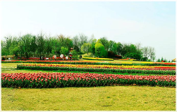 广州公园绿化案例