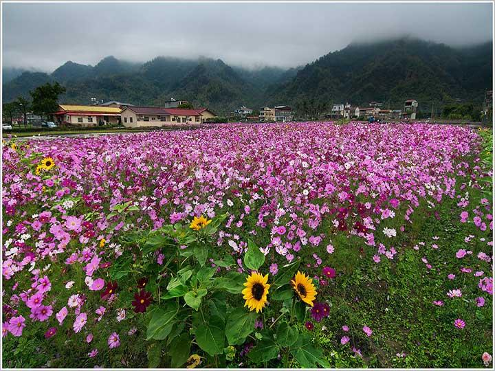 广东省广州海珠湿地公园花卉景观工程案例介绍
