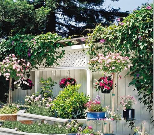 佛山花卉市场景观工程案例介绍
