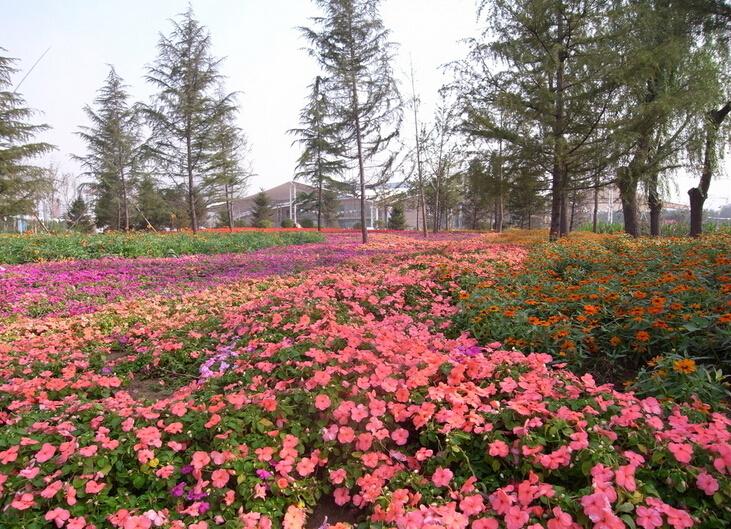广州亚运城花卉景观工程项目案例介绍