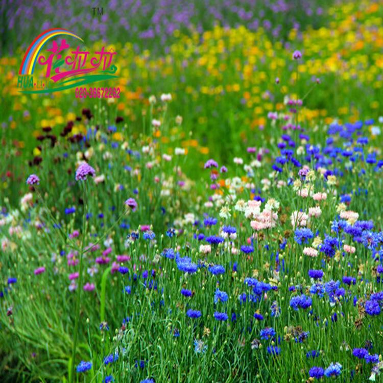 花卉施肥八不宜,不当的施肥会适得其反