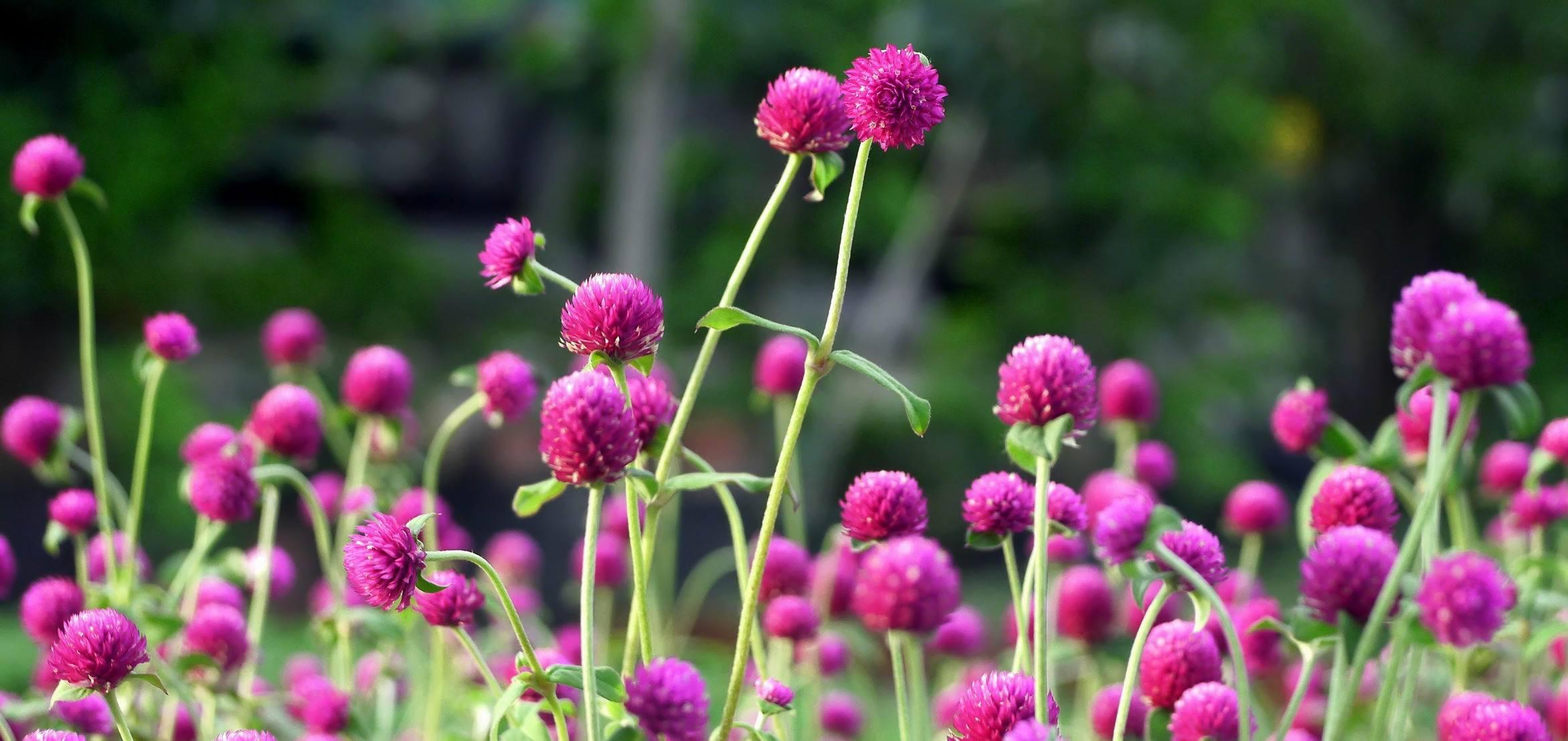 花期在秋天的草花品种,你种了吗?