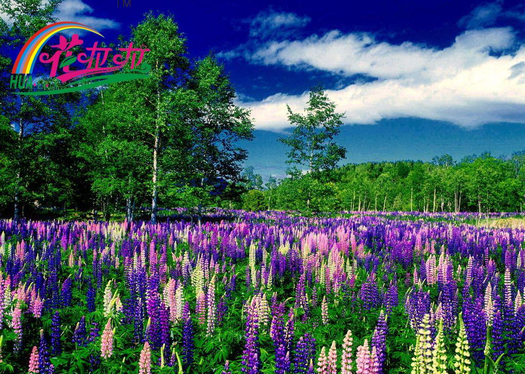 植识 | 宿根花卉品种习性大全分析