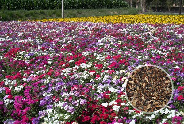 景区野花组合