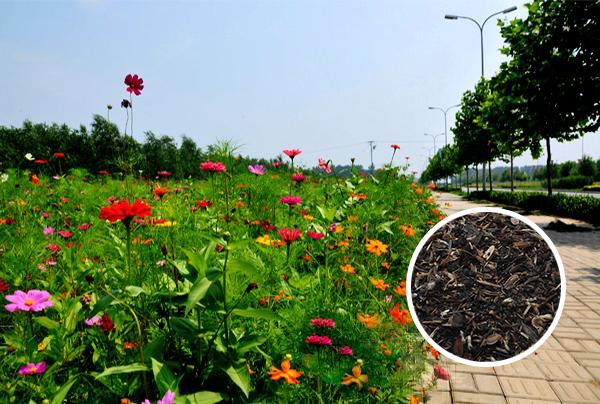 道路景观野花组合