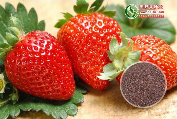 观赏草莓种子