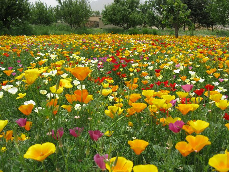 耐旱野花组合