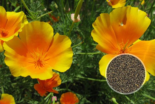 花种子_鲜花种子图片大全