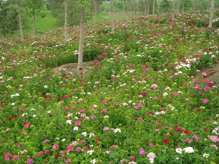 林间花境野花组合