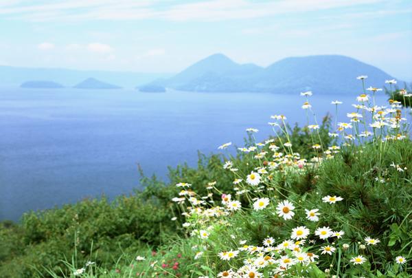 沿海花卉组合