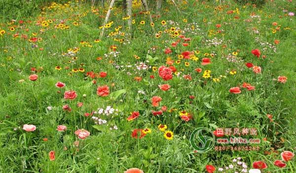 多年生野花组合