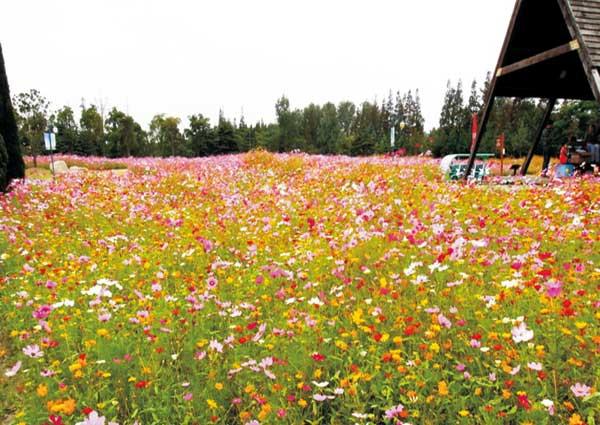 南国风光野花组合