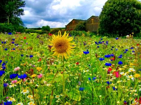 别墅花园野花组合