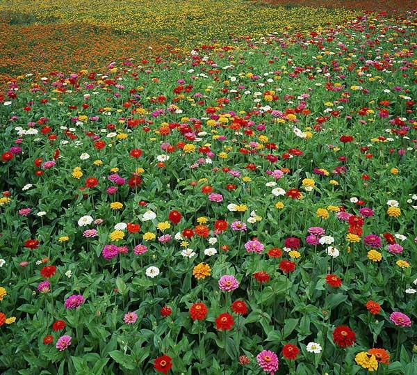 色彩野花组合