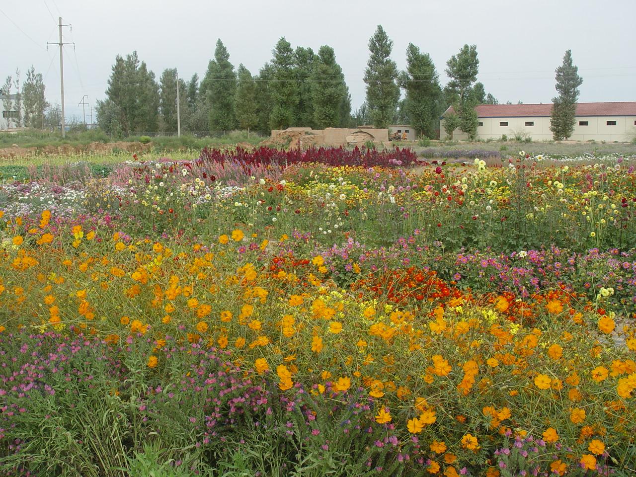北国风光野花组合