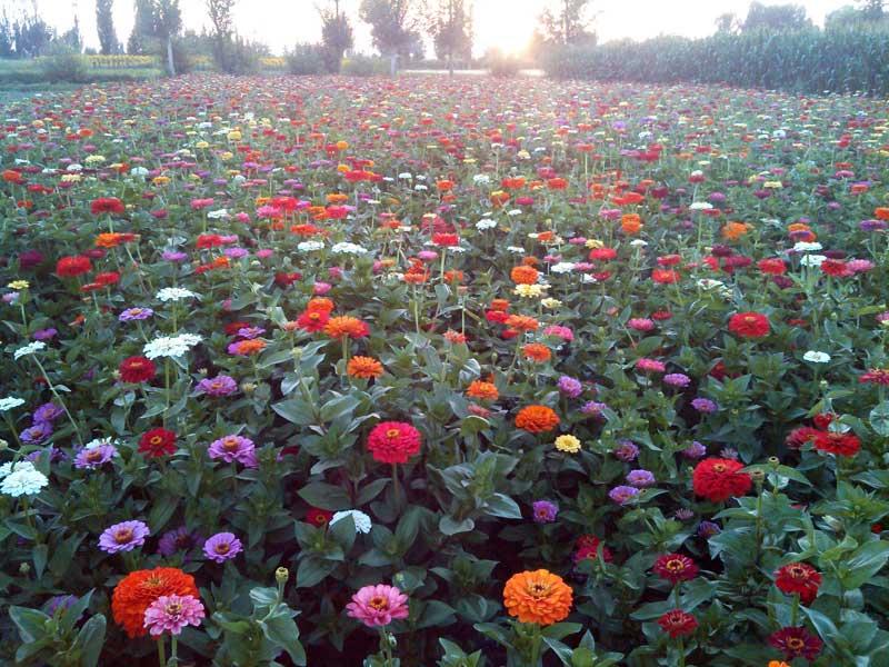公园花艳野花组合