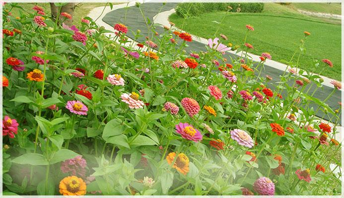 球场花卉景观方案