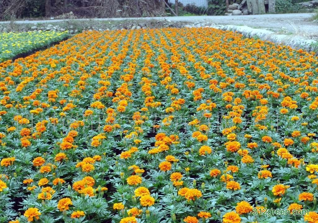 罗浮山小洞天度假村景观花卉种植工程方案